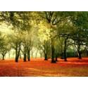 Bosque Verde
